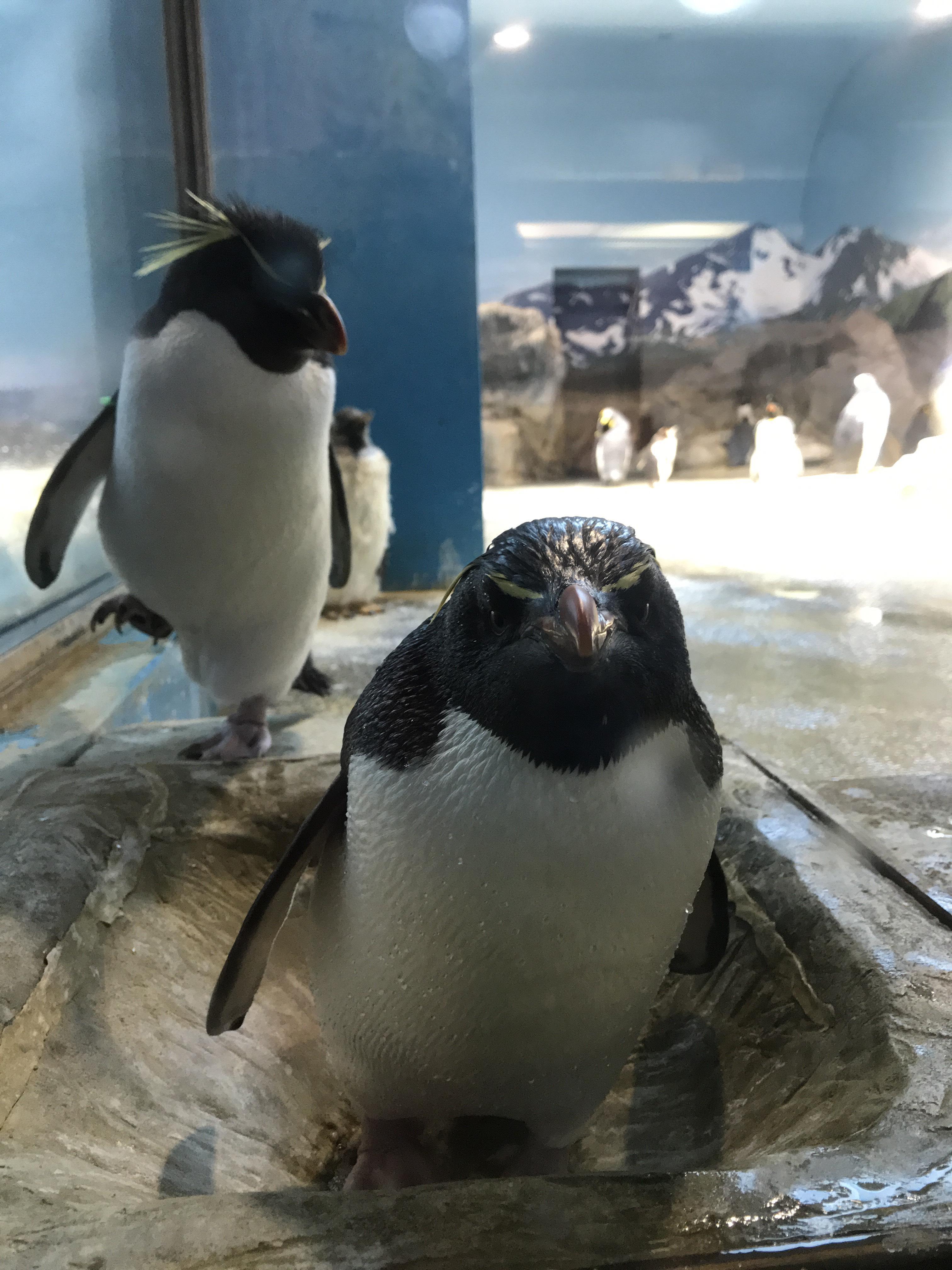 長崎ペンギン水族館①