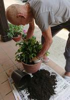 鉢植えの植え替え