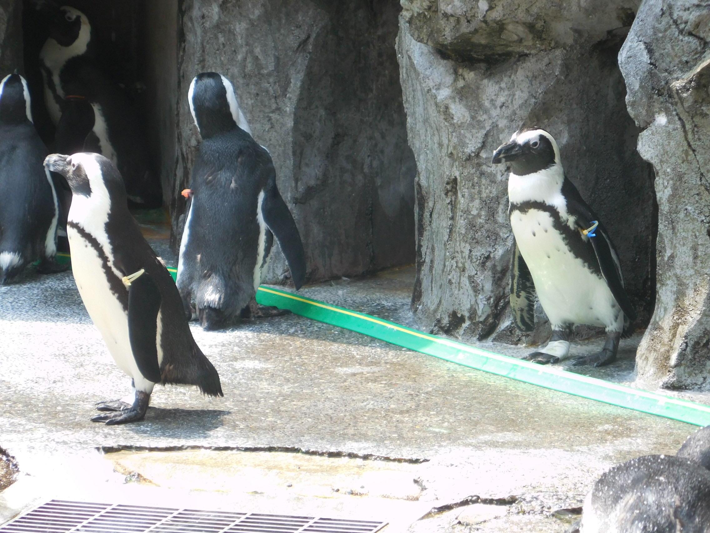 みんなでペンギン水族館に行ってきました②